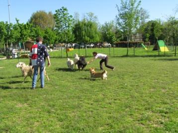 Sheep Dog 8