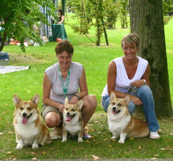 Welsh Corgi Pembroke Double Creek