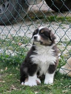 corso primo soccorso cani