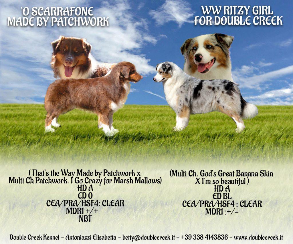 cuccioli austalian shepherd, cuccioli aussie